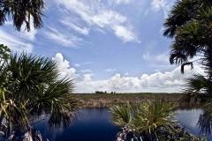 Tamiami-Trail-scene