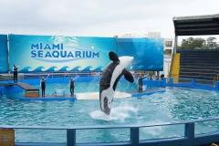 Miami_seaquarium