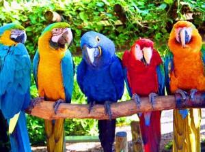 Алексей Чурсин приглашает на экскурсию в Майами в парк попугаев