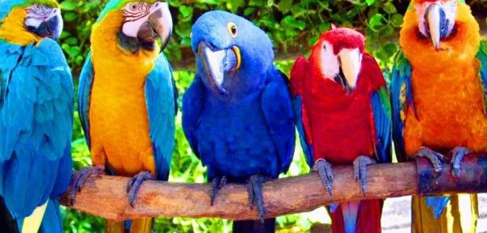 Поездка в парк «Джунгли попугаев»